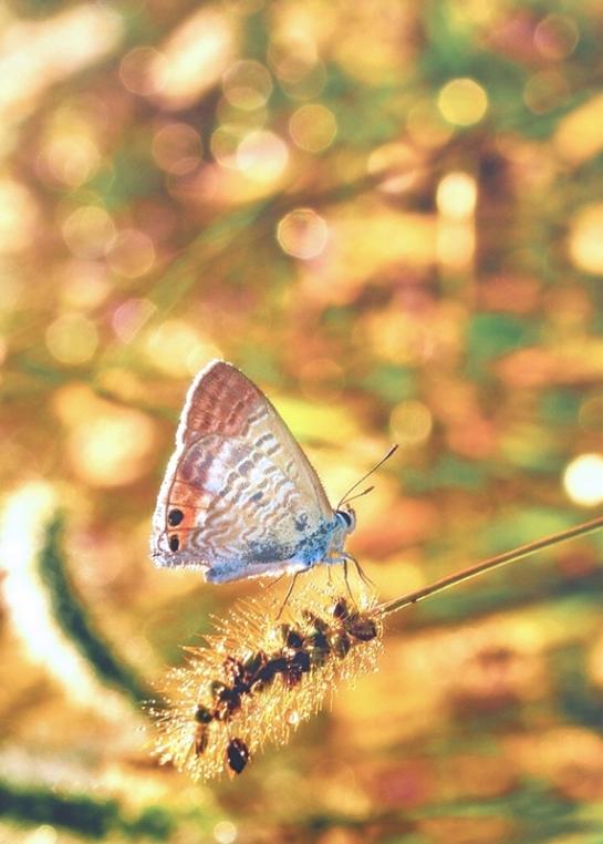butterfly2o